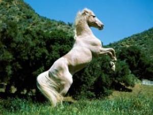 velká kořist na koni velký péro